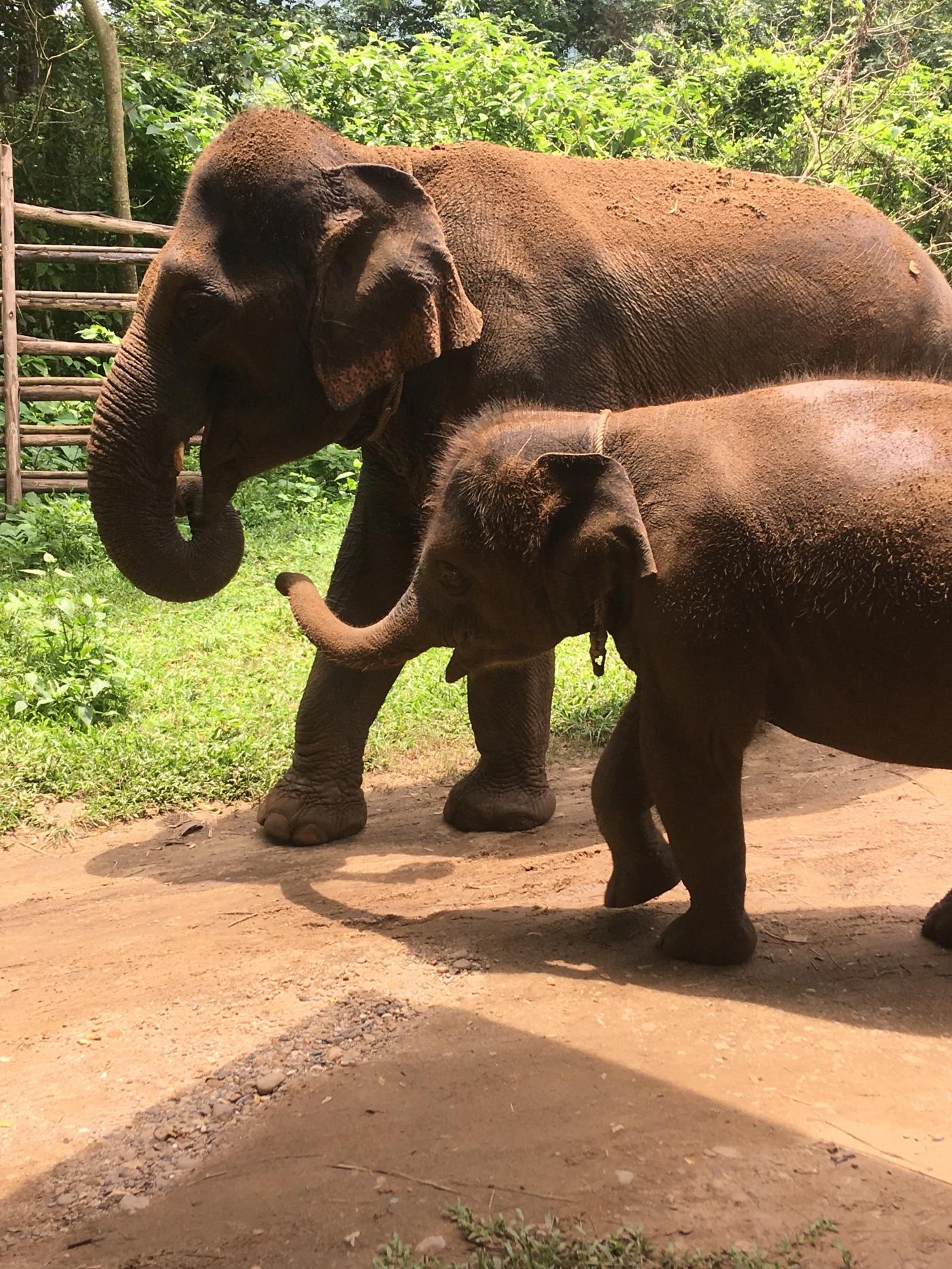 Volunteering in Thailand – Part 2 – World, Meet Dani
